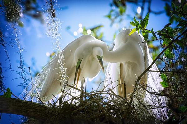 "WPP1141  ""Love Birds"""