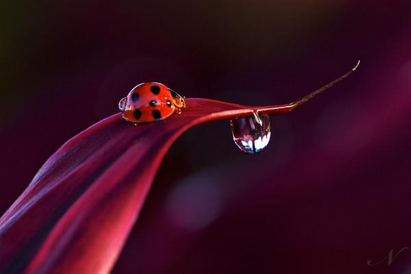 "WPP1139  ""A Ladybug's World"""