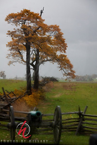 WitnessTree This shot was taken through a bus window from the opposite side of the bus. It was raining pretty heavily so we did not get out to walk around at this stop. I loved the view as I saw it from the far side of the bus and it was just as out guide was explaining how some of these trees at Gettysburg were 'witness trees' in that they were here to witness the battles and slaughter at the Battle of Gettysburg. Very moving to think that these trees saw all that history as it happened. Not suitable for all size reprints.