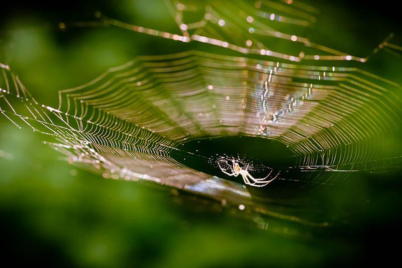 Spider-7811
