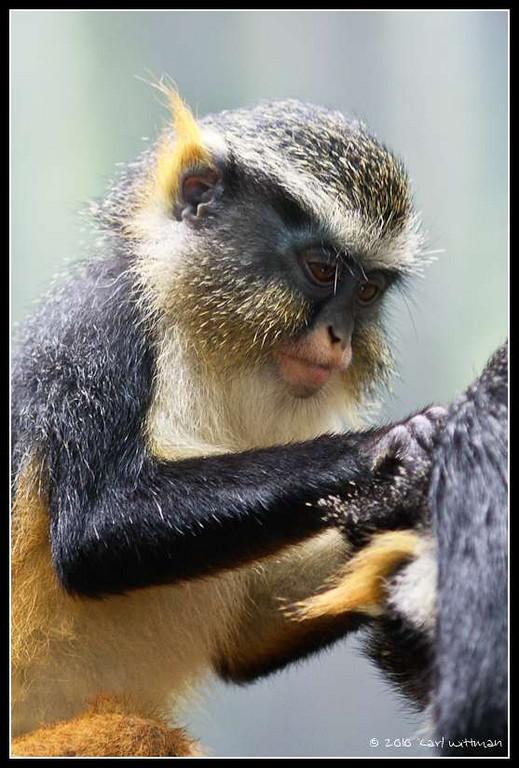Primate Picking