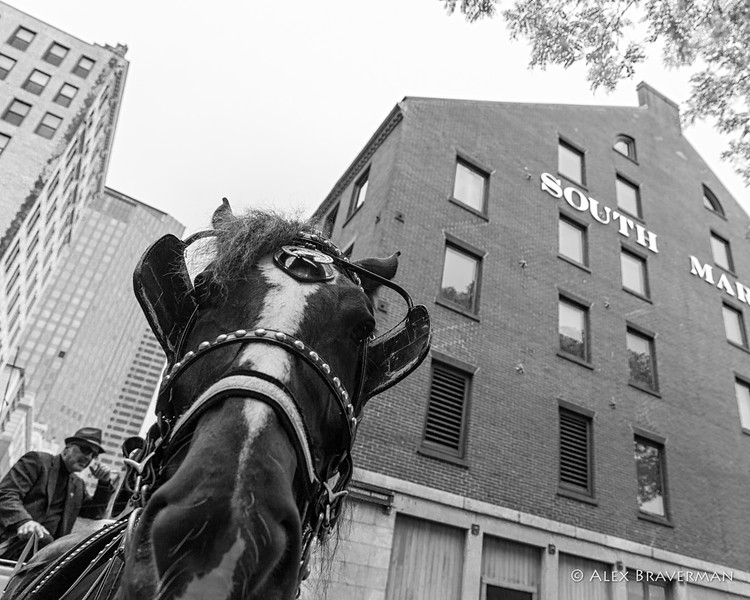 Horse at South Market