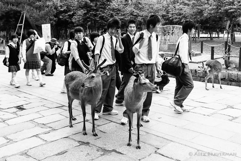 deer boys