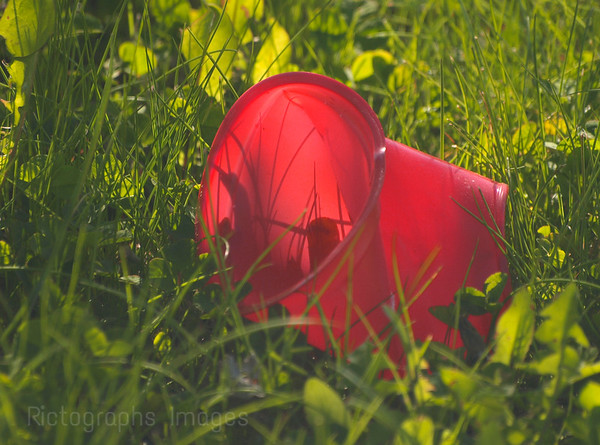 Red Cup, Green Grass