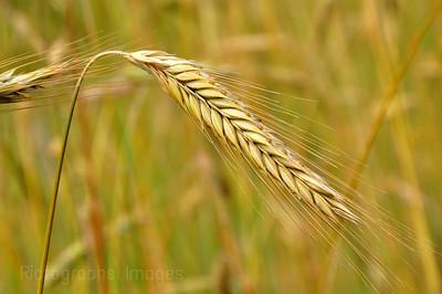 A Good Crop of Seeds
