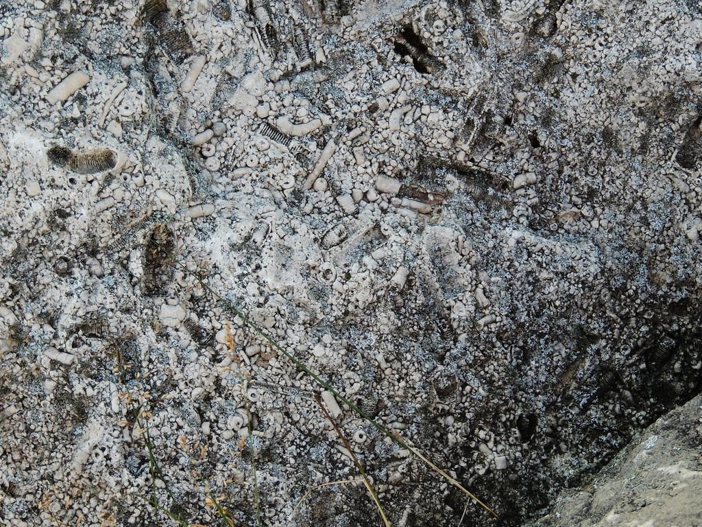 Paleolithic Limestone Fossils, Rictographs Images
