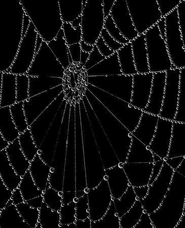 A spiderweb after a heavy fog.