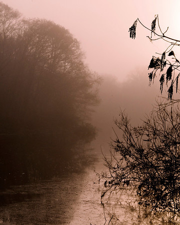 Withlacoochee River in sunrise mist.
