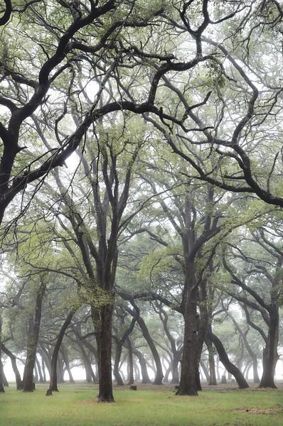 Misty Park