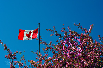 Spring Blooms, Flag Shot