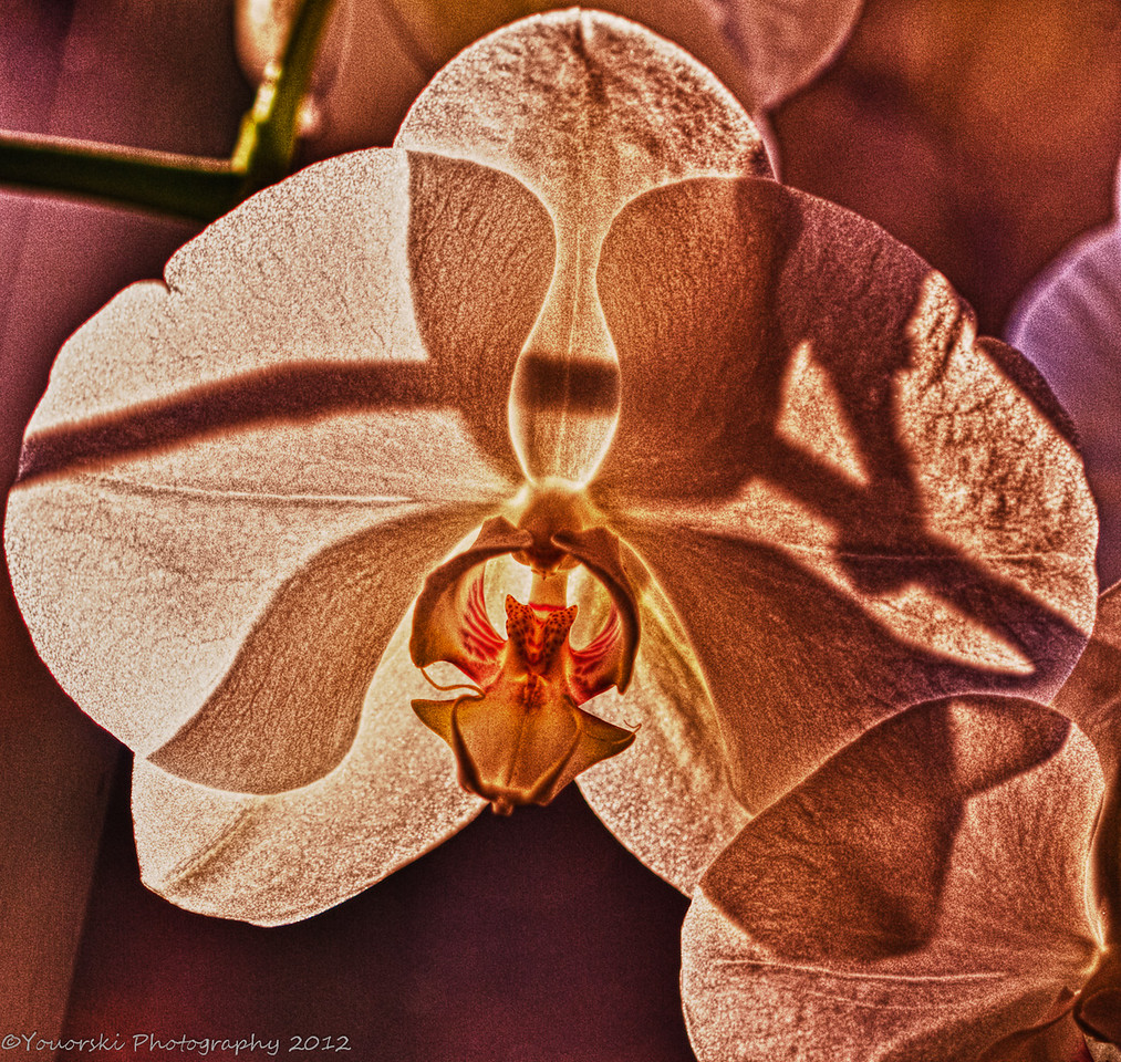 Winter orchid by Lins