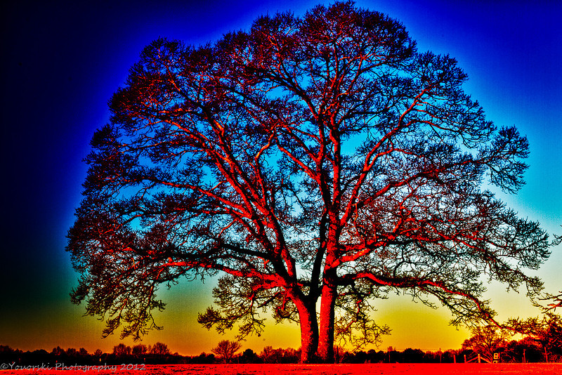Just playing with severe contrast and halo. Favorite Oak