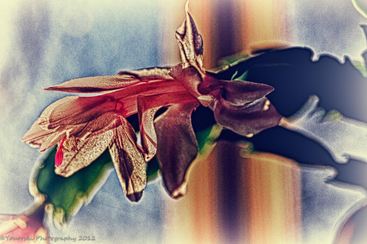 January cactus.
