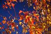 autumn colors - sky darkened using polarizer