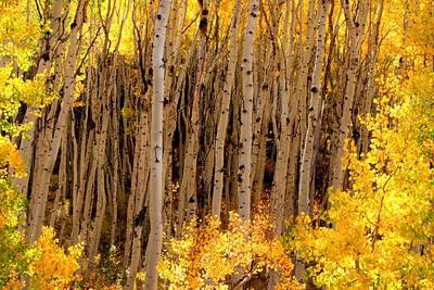 Aspens of Colorado 2008