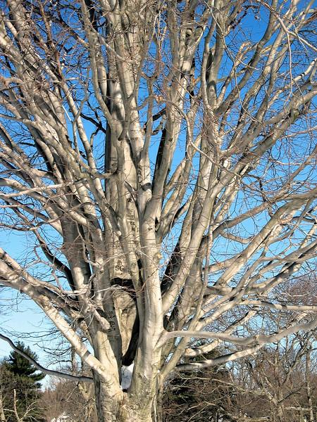 Assgt: Trees