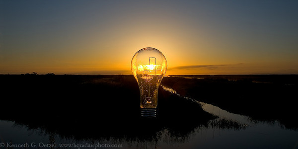 Incandescent For Last Photographer Standing #4, Organic or Artificial