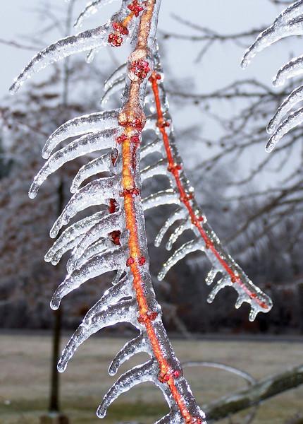 Ice Storm 05