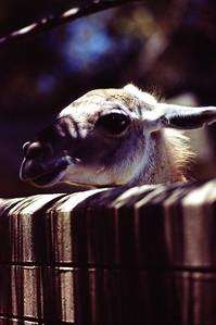 San Diego Zoo, June 1984.