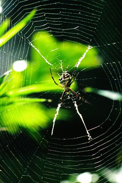 Spider, Escondido, California.