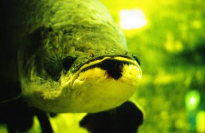 Vancouver Aquarium, Vancouver, BC Canada.
