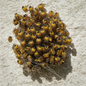 Invertebrates (lots of them)