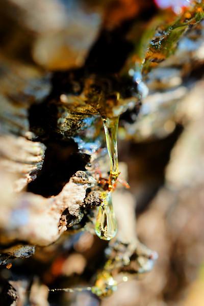 Pine sap and pine bark macro abstract