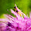 Yellow and black bug on a purple thistle flower with added texture