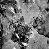 Wild grapes and grapeleaves in monochrome