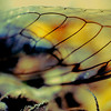 Cicada wing abstract
