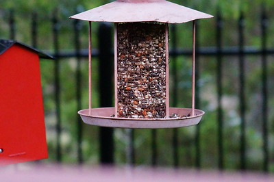 Birds from 6.24.16