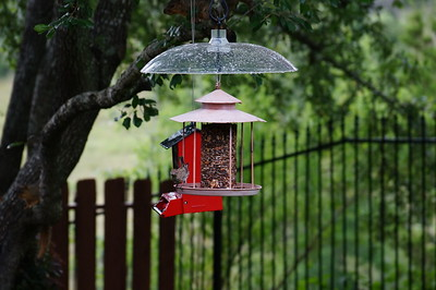 Birds from 6.25.16