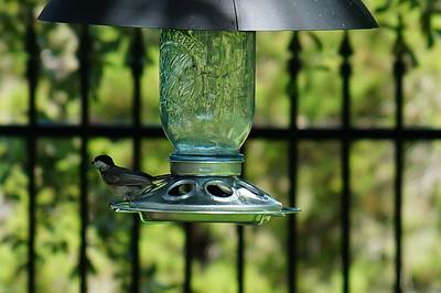 Birds from 6.26.16