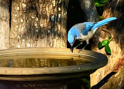 Birds from 8.31.16
