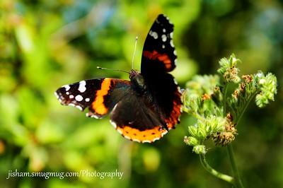 Mt Bonnell Flora Facebook 4.30.15