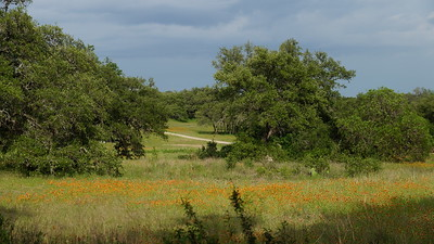 Images from folder Nature Photo Stroll 2244 Patterson Rd Barton Creek 5.14.15