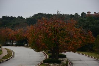 Images from folder Senna Hills Fall Color Entrance 12.14.16