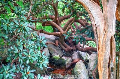Zilker Botannical Gardens 6.24.16 HDRs