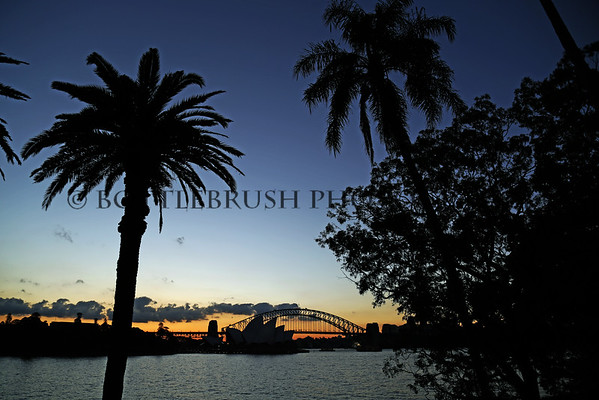 Sydney Harbour Palm Tree Sunset