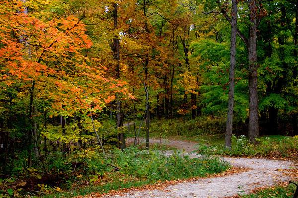 Autumn At Taylorsville #19