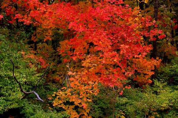 Autumn At Taylorsville #22