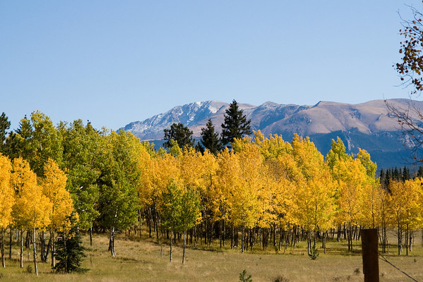 Autumn Foliage in Colorado
