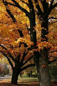 fall 05 009
