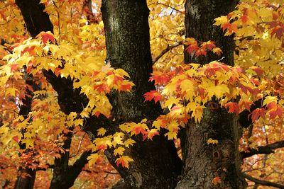 fall 05 010