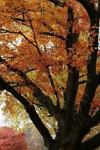 fall 05 011
