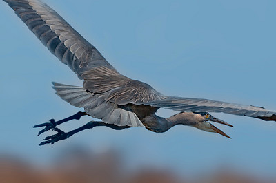 GBH in flight.