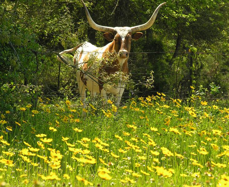 Pure Texas.