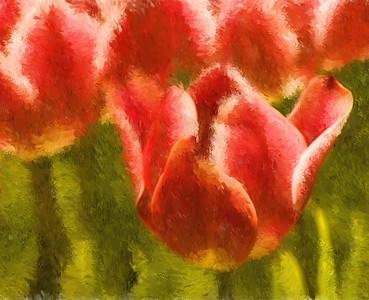 Impression, Tulips