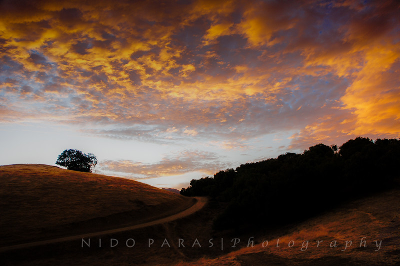 Pleasanton Ridge Regional Park