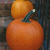 """Orange"" - some of the pumpkins that Brevard and I have on our front steps."